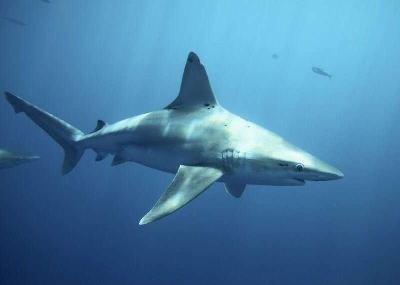 Avoiding stormy seas, sharks fish around Israeli waters