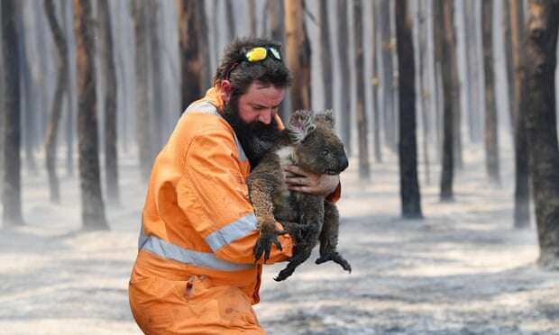 Jerusalem zoo sends aid to animals injured in Australia fires